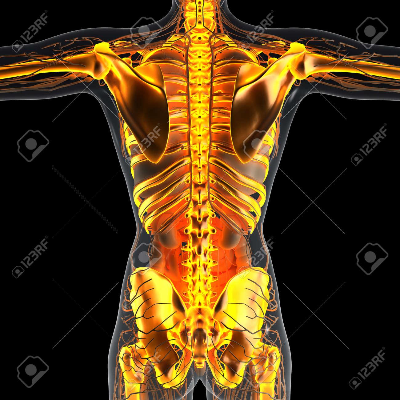 Berühmt Anatomie Knochen Praktisch Zeitgenössisch - Menschliche ...