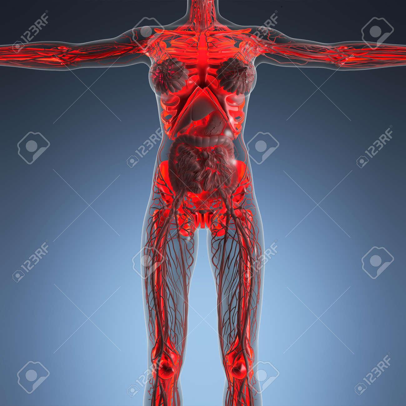 Moderno Henry Anatomía Gris Adorno - Imágenes de Anatomía Humana ...