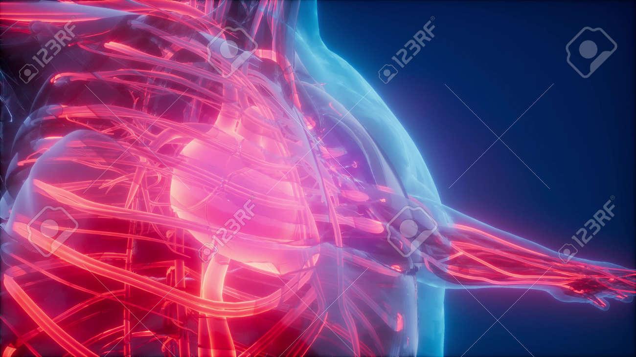 science anatomy scan of human blood vessels - 119582167