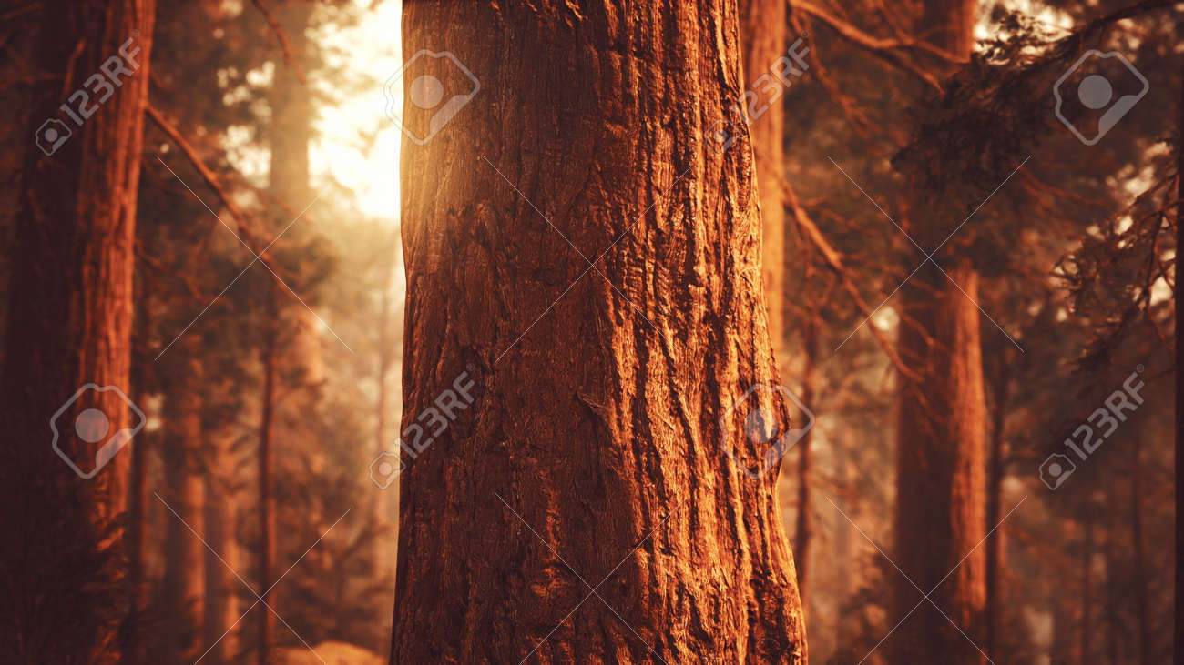 giant sequoias in redwood forest - 168362404
