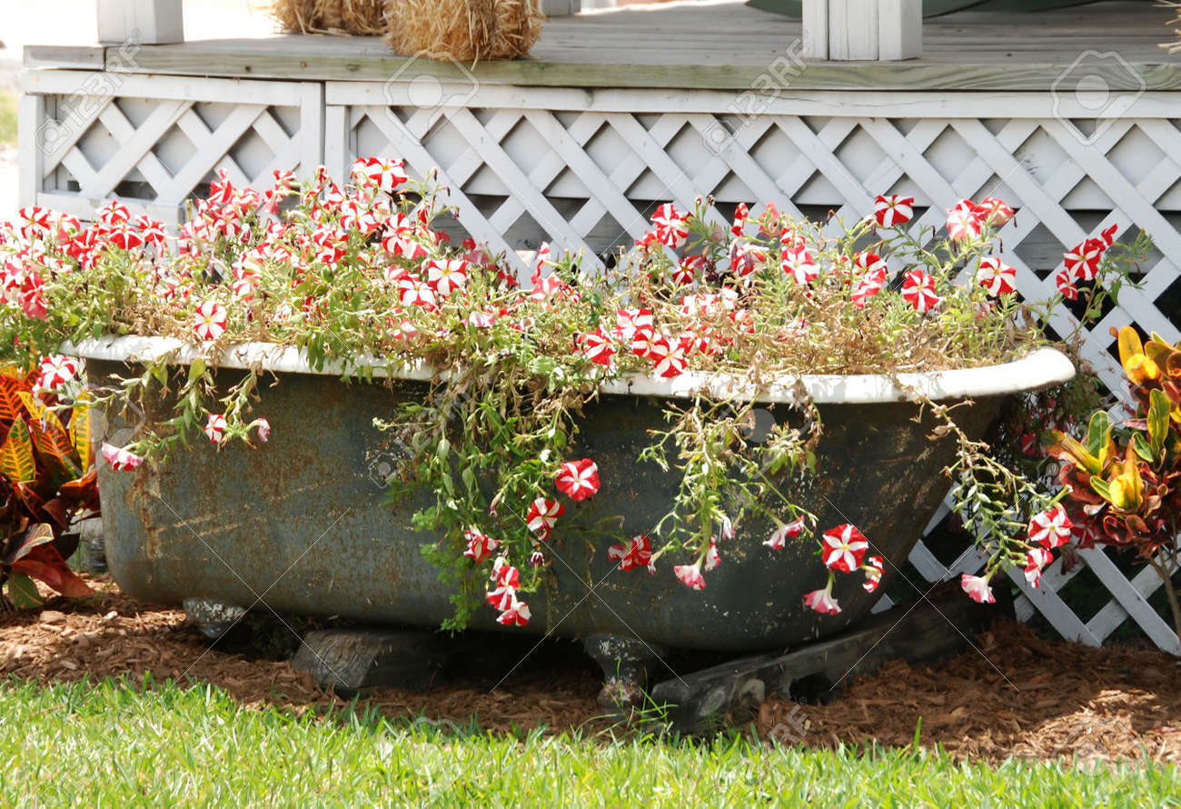 Old Bath Tub Turned Into A Flower Bed Stock Photo, Picture And ...