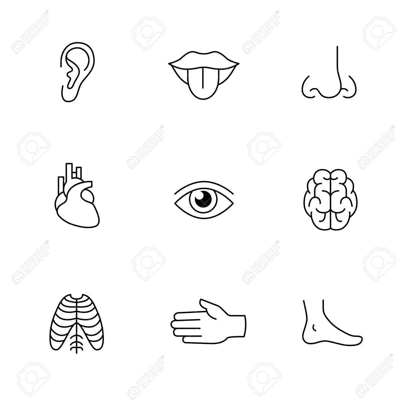Medical Icons Thin Line Art Set Human Organs Senses And Body Royalty Free Cliparts Vectors And Stock Illustration Image 52949118