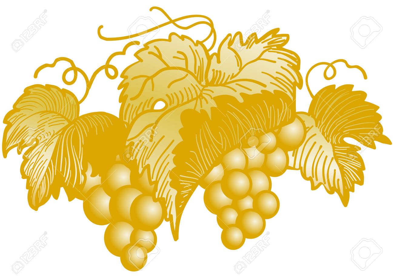 Golden cluster of grapes Stock Vector - 7694336