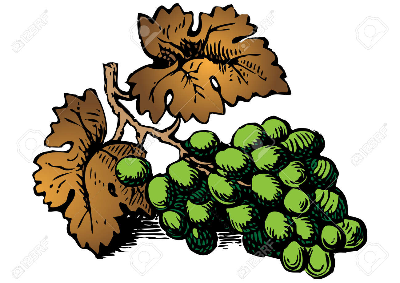 grapes Stock Vector - 7694369