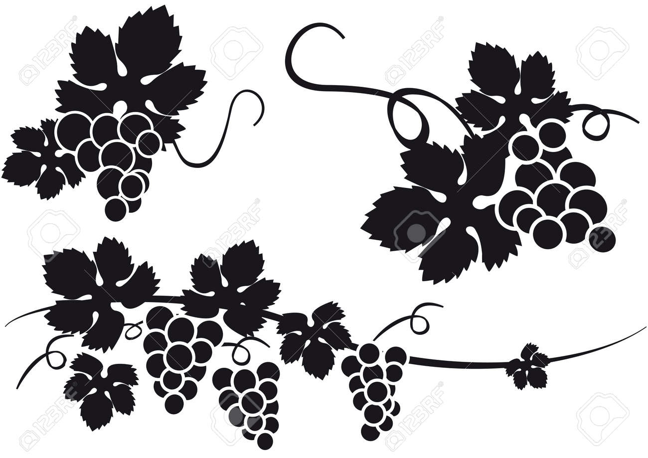 grapes royalty free cliparts vectors and stock illustration image rh 123rf com graph vectors desmos grapes vector art