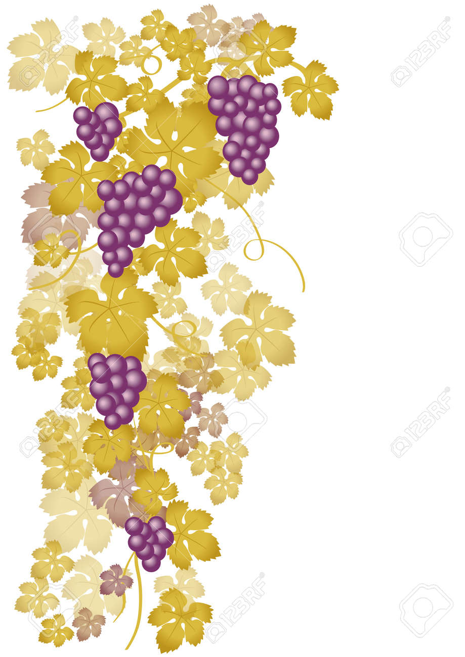 Vine with white grapes Stock Vector - 7974999