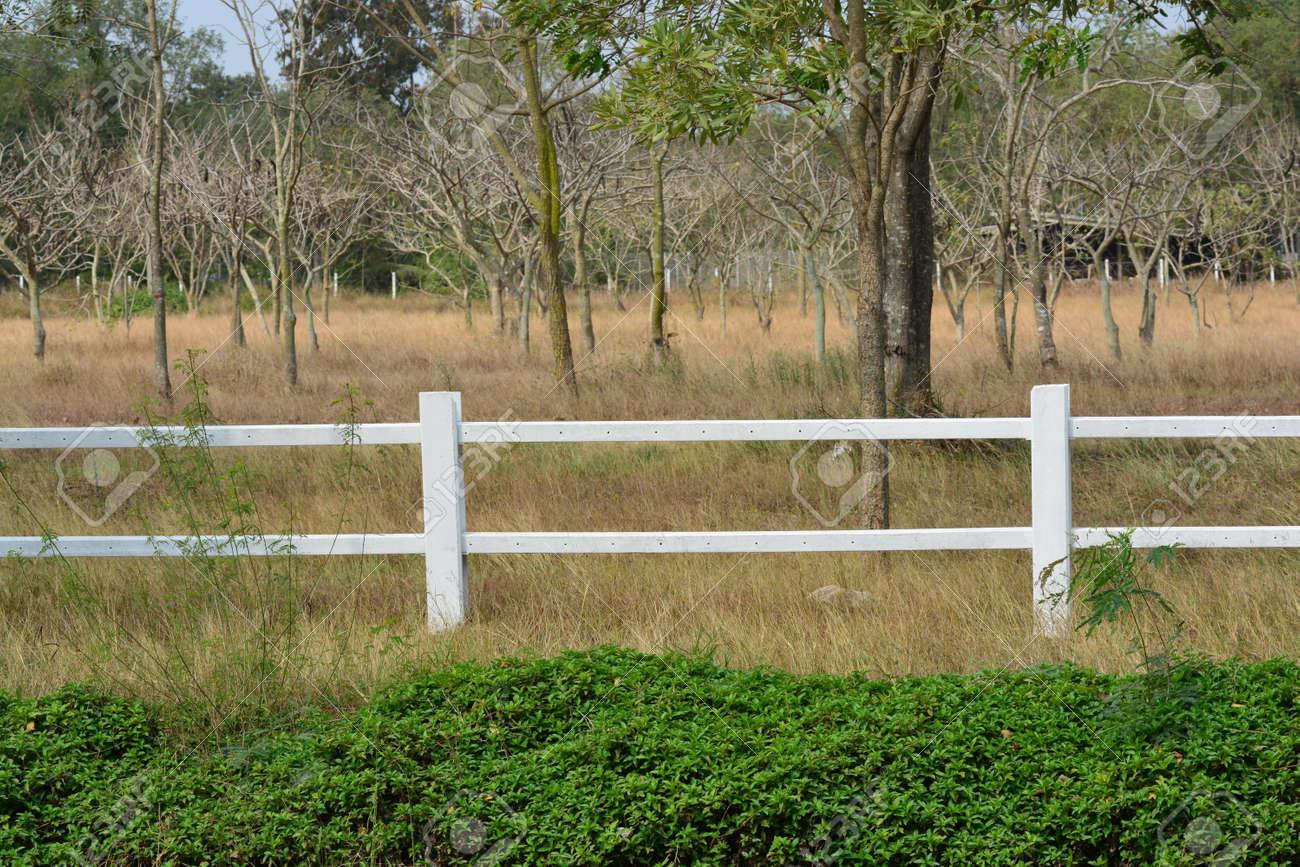 weißer zaun mit gras lizenzfreie fotos, bilder und stock fotografie