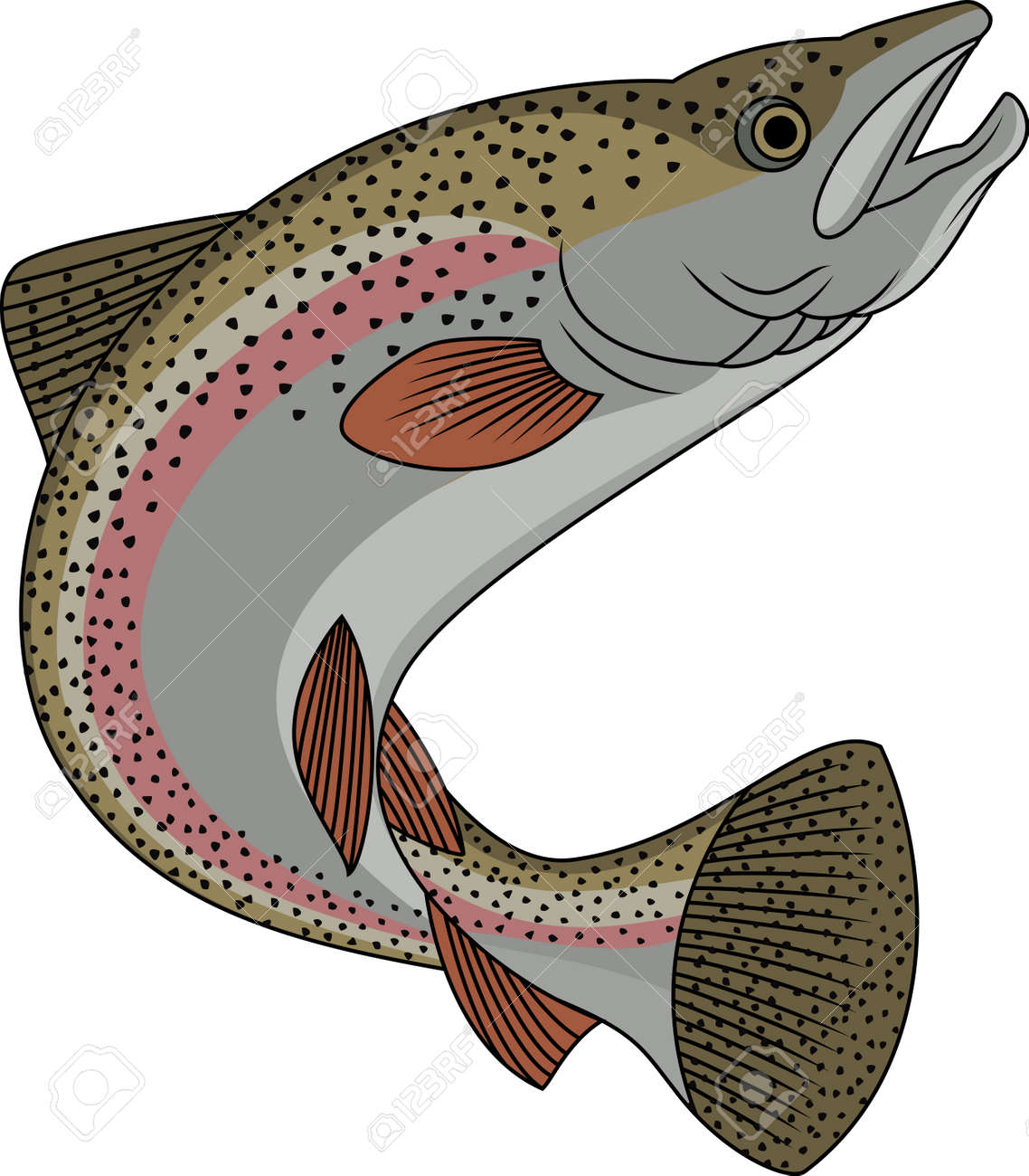 Freshwater fish clipart - Freshwater Trout Fish