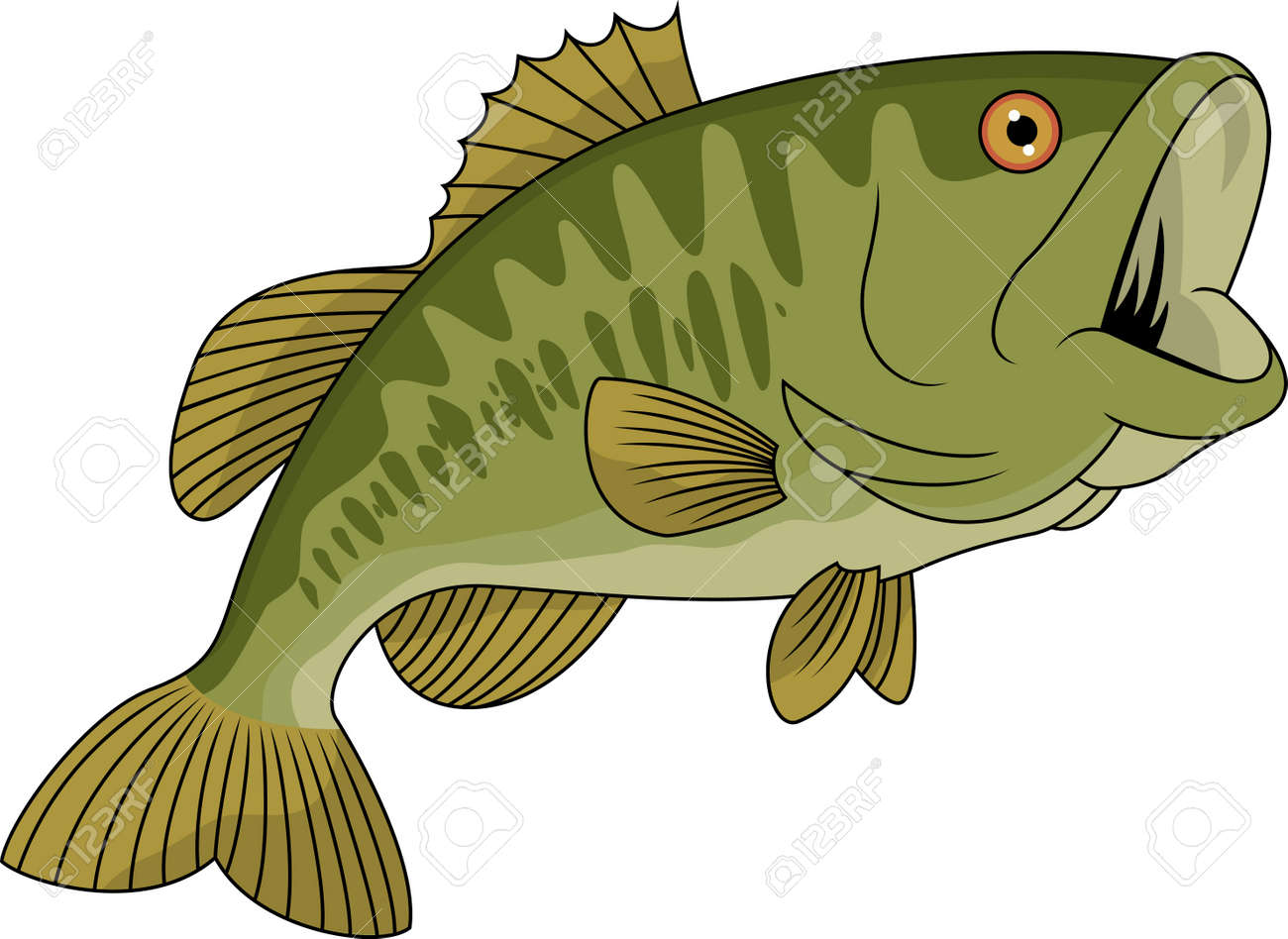 Bass fish Stock Vector - 13494973
