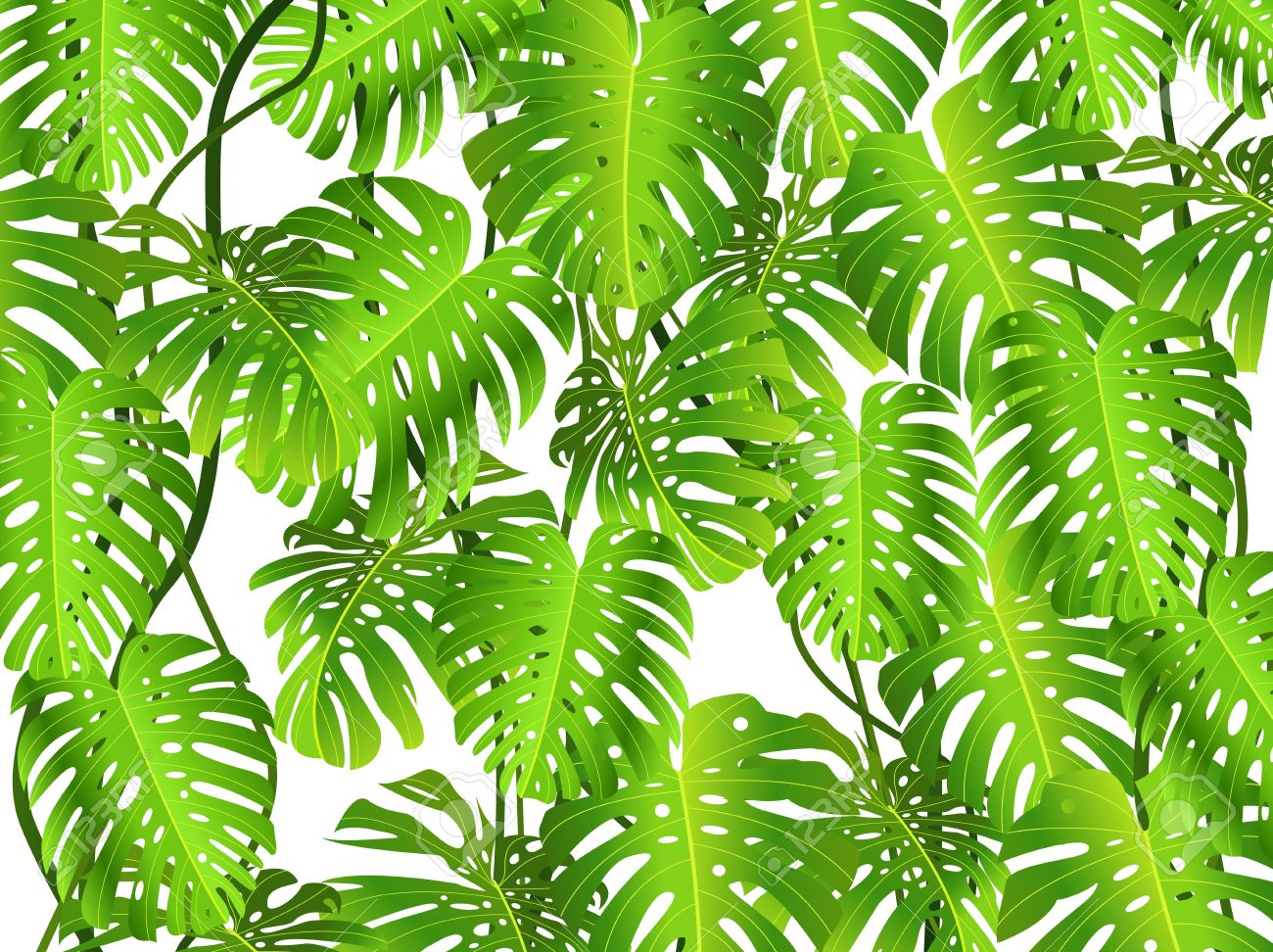 Tropical Leaf Background Royalty Free Cliparts Vectors And Stock Illustration Image 13496692 Find & download free graphic resources for leaf background. tropical leaf background