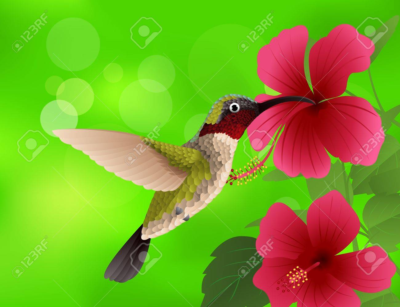 illustration of hummingbird with red flower - 14324643