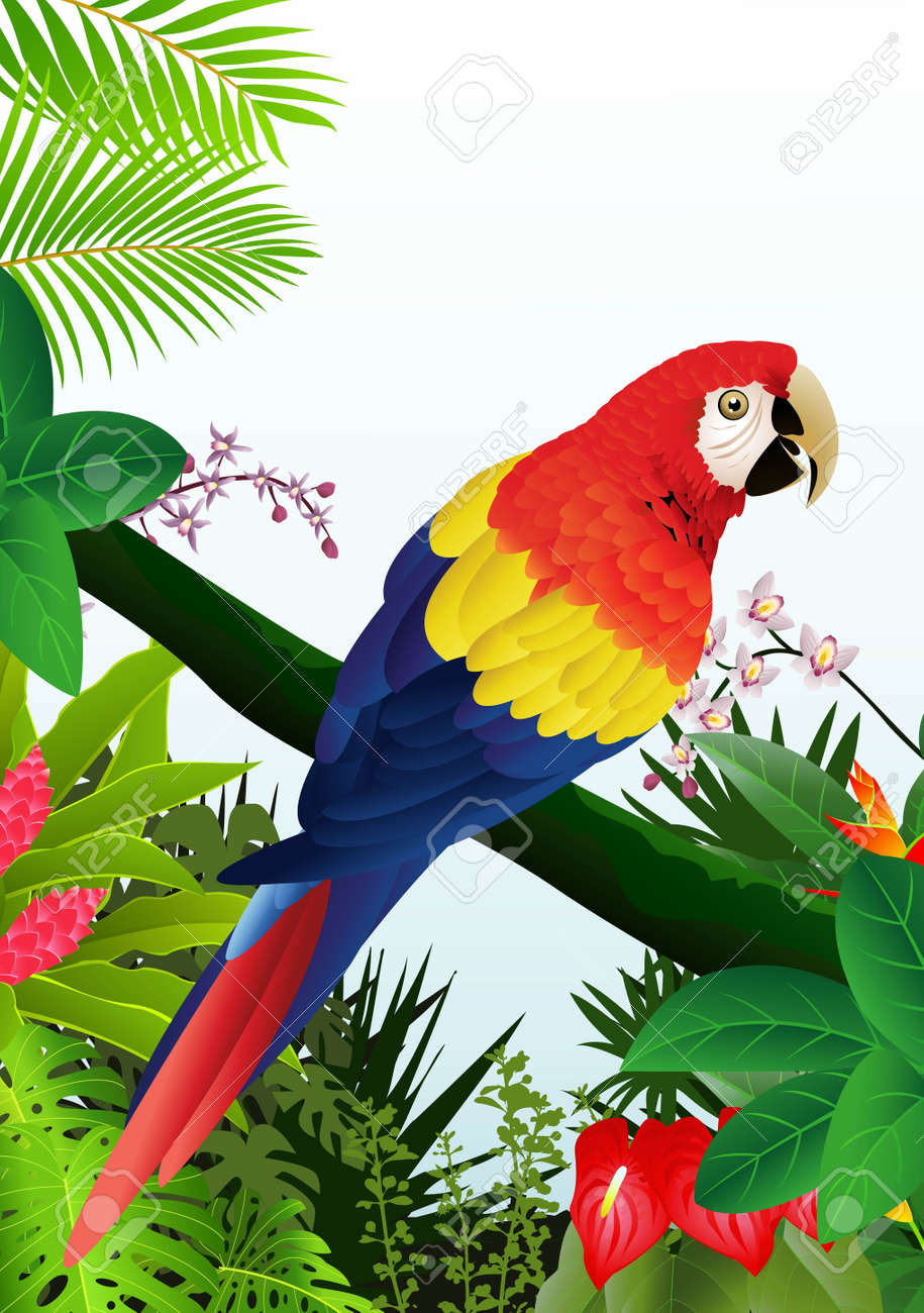 illustration of Macaw bird in the tropical forest - 14324645