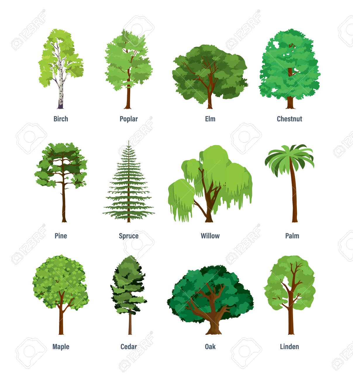Collection of different kinds of trees. - 80108700