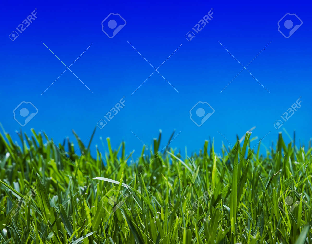 Brilliant emerald grass with beautiful cloudless summer sky - close-up Stock Photo - 2338146