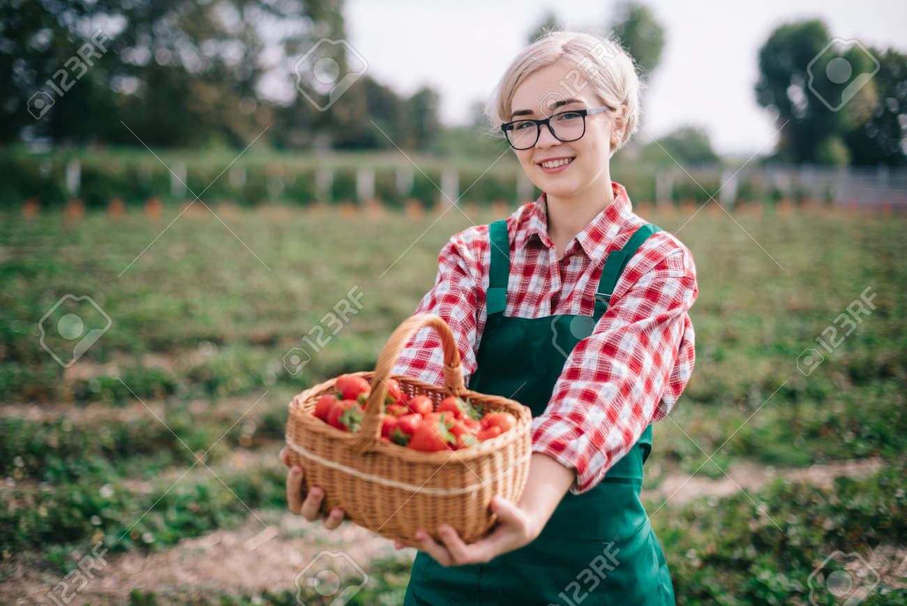 Farmer is harvesting strawberries. Young happy woman in an apron shows full basket of ripe strawberries. - 167585857