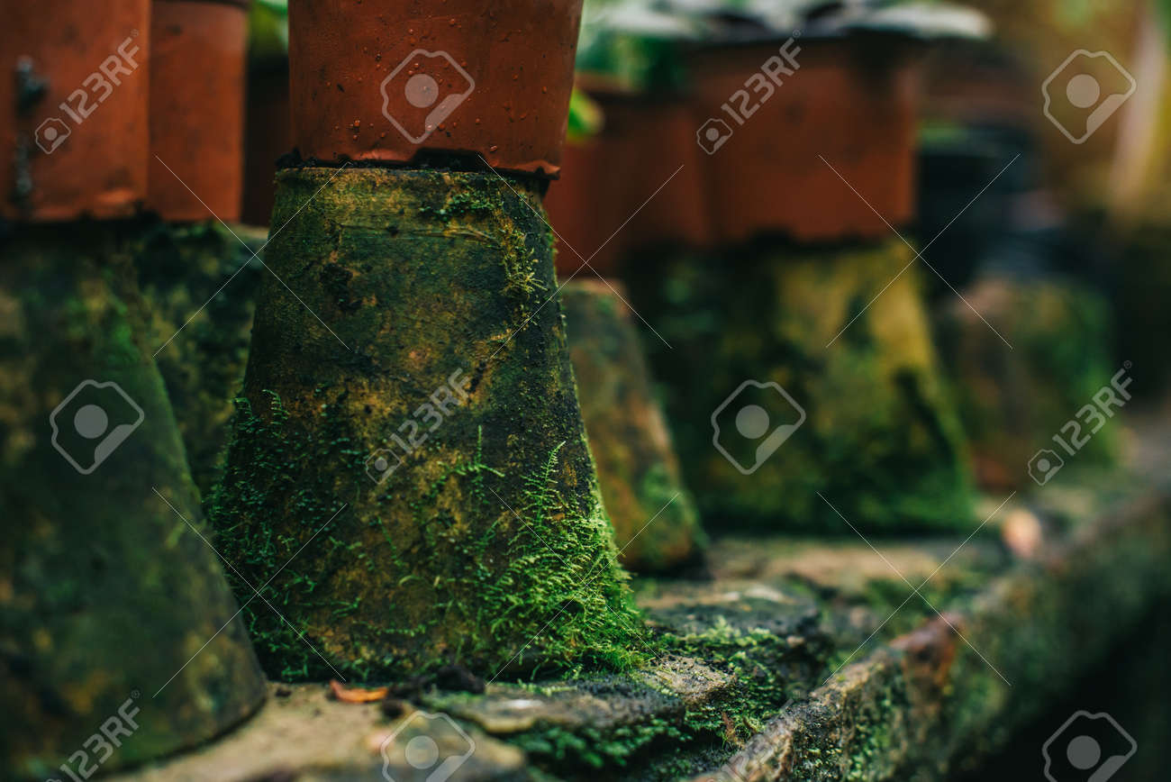 old clay flower pots covered with moss stand in row in greenhouse, slective focus - 171316239