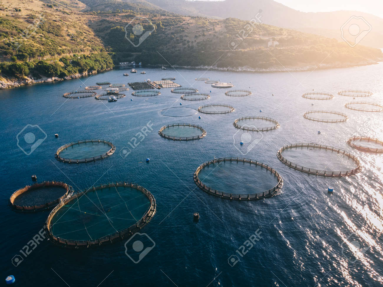 Fish farm in sea bay, aerial view. Round underwater cages. Corfu, Greece. - 173391457