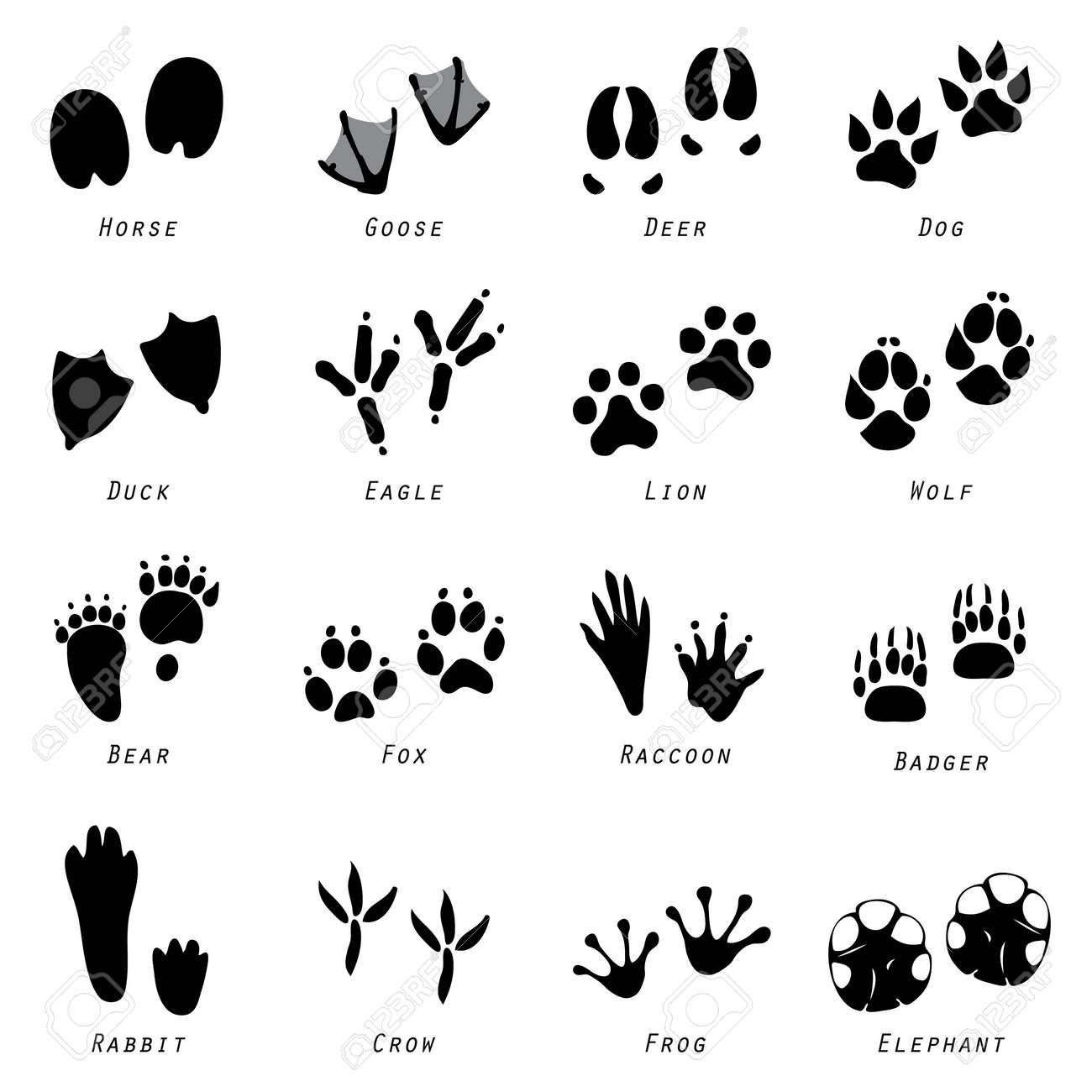 Animaux Spoor Footprints icône vecteur Banque d'images - 43924798