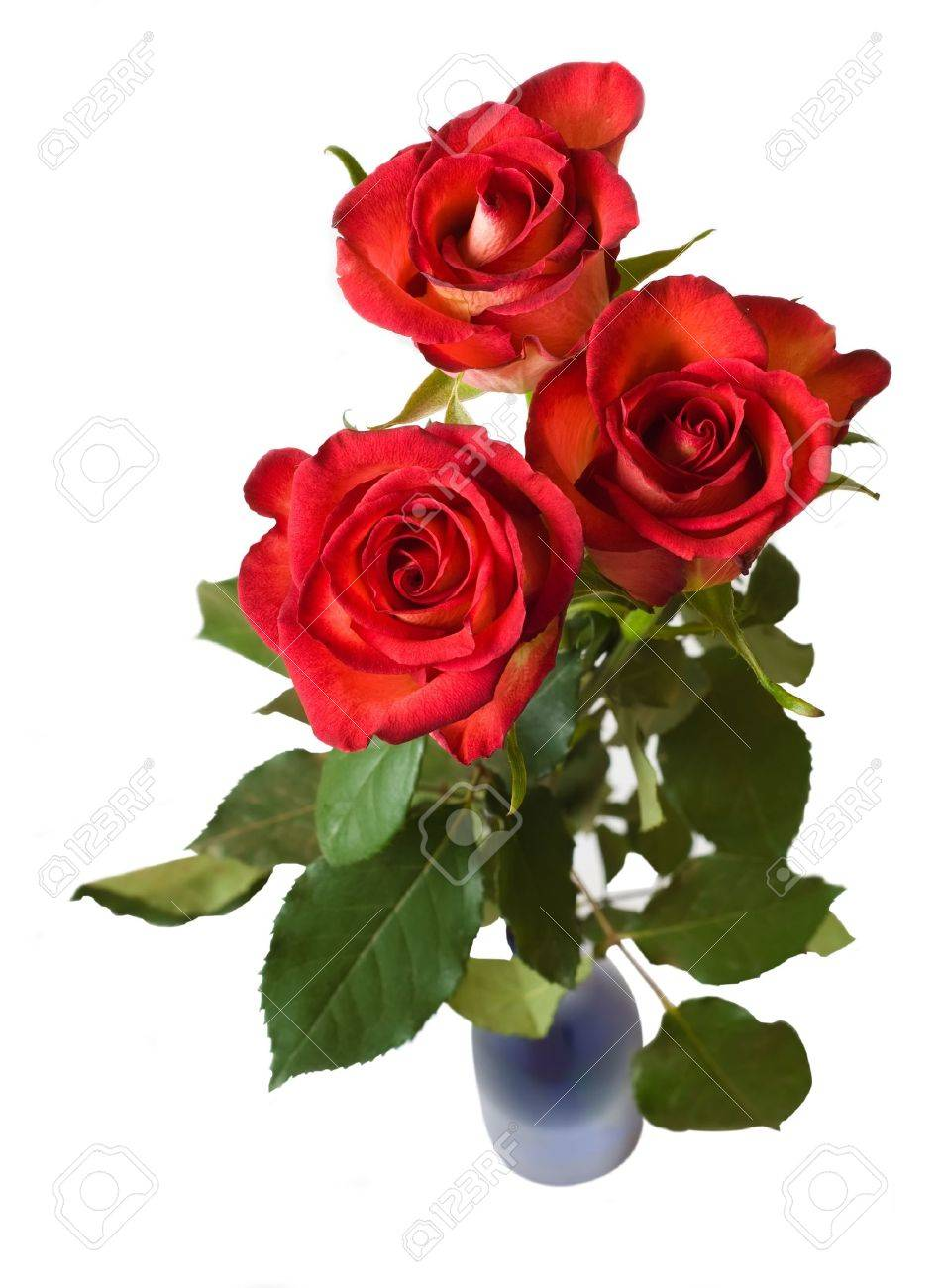 Rozen In Vaas.Drie Rode Rozen In Vaas Geaƒ A Soleerde Over Witte Royalty Vrije