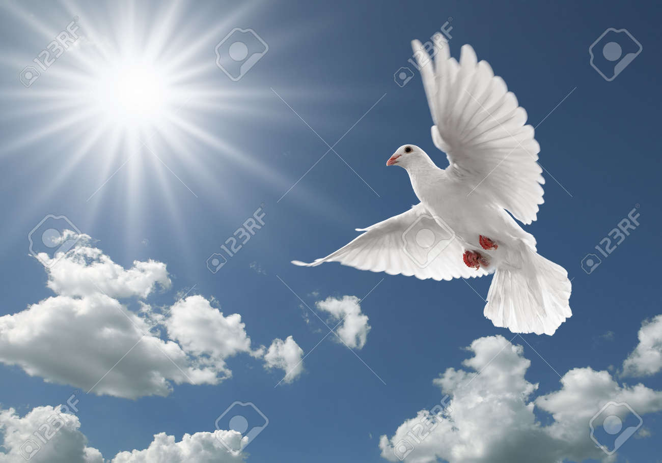 white dove flying on clear blue sky Stock Photo - 4622593