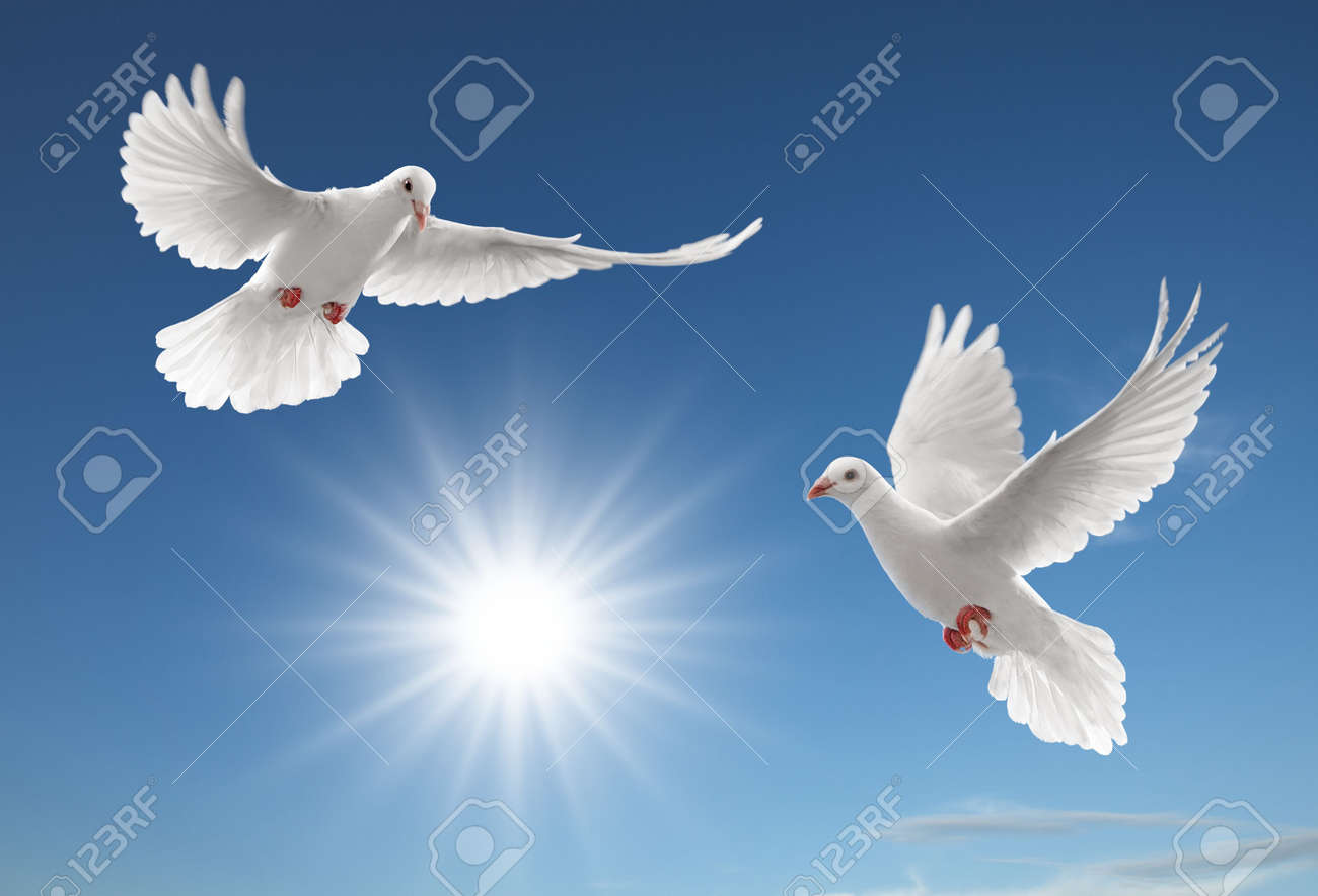 Two White Doves Flying On Clear Blue Sky Stock Photo Picture And