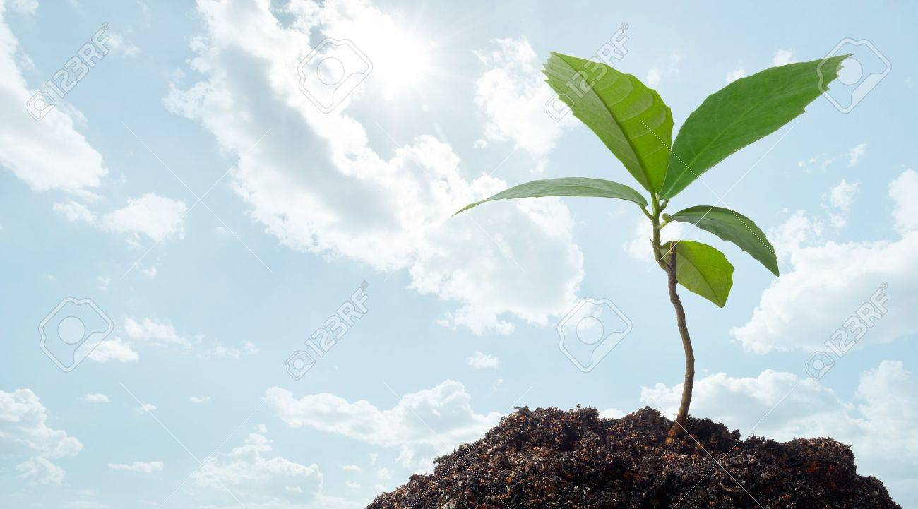 growth of a new plant against clear blue sky Stock Photo - 19161943
