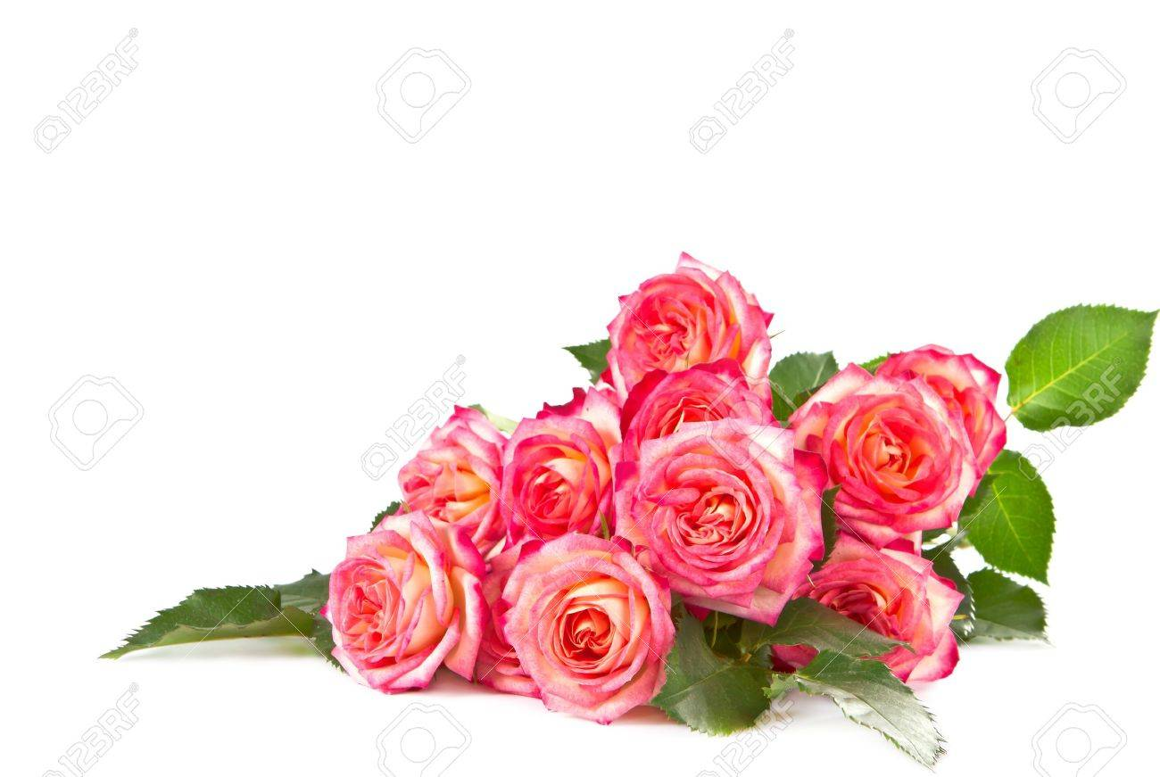 Rose bouquet stock photos royalty free rose bouquet images bouquet of beautiful color of roses on a white background izmirmasajfo