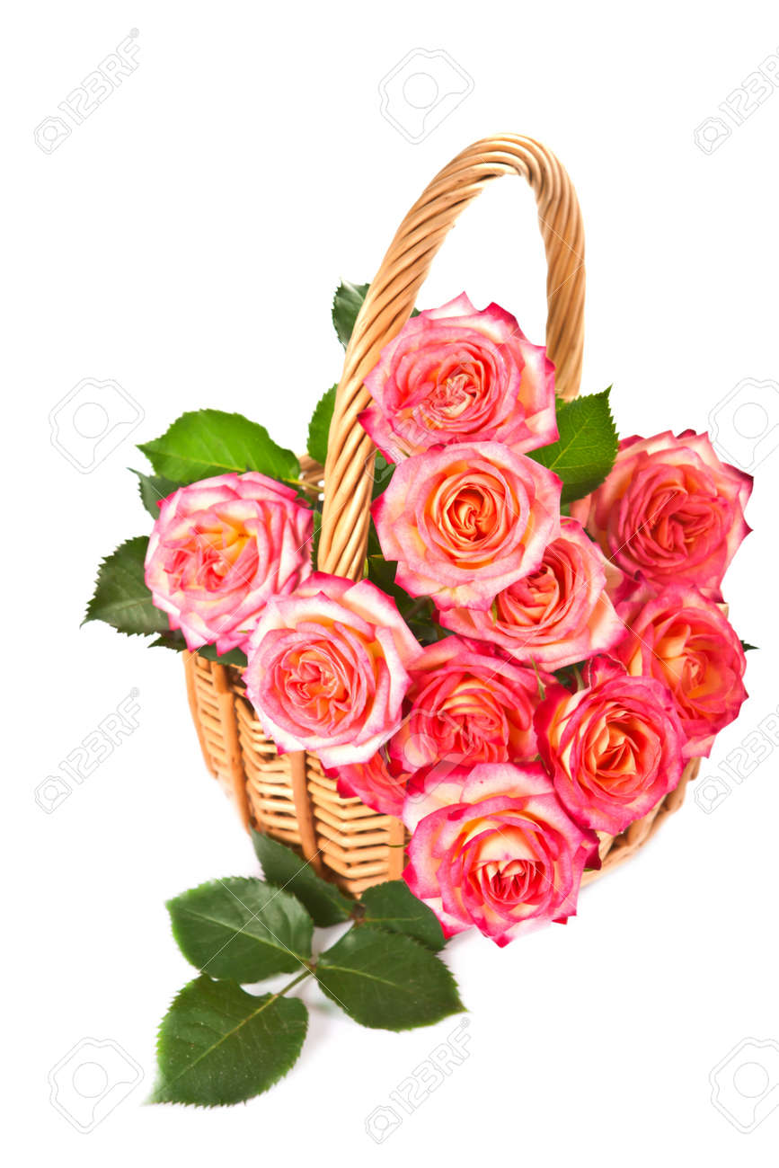 bouquet of beautiful color of roses in a basket on a white