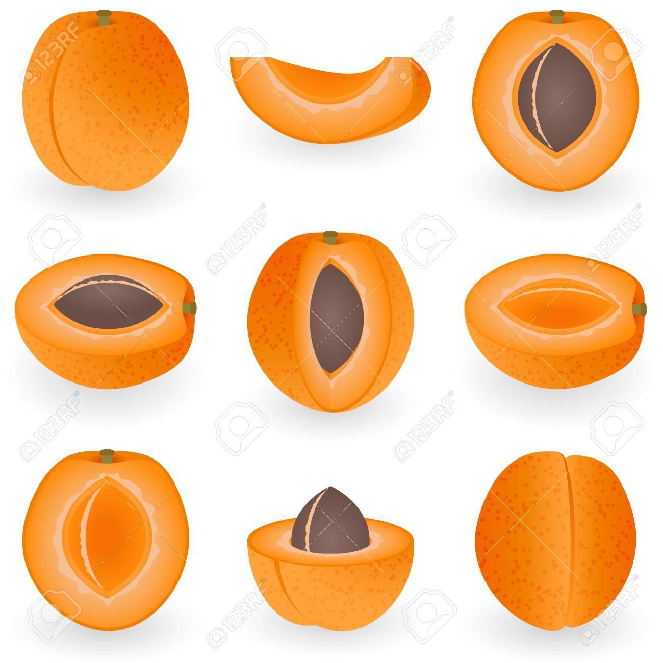 Icon Set Apricot Stock Vector - 21448847