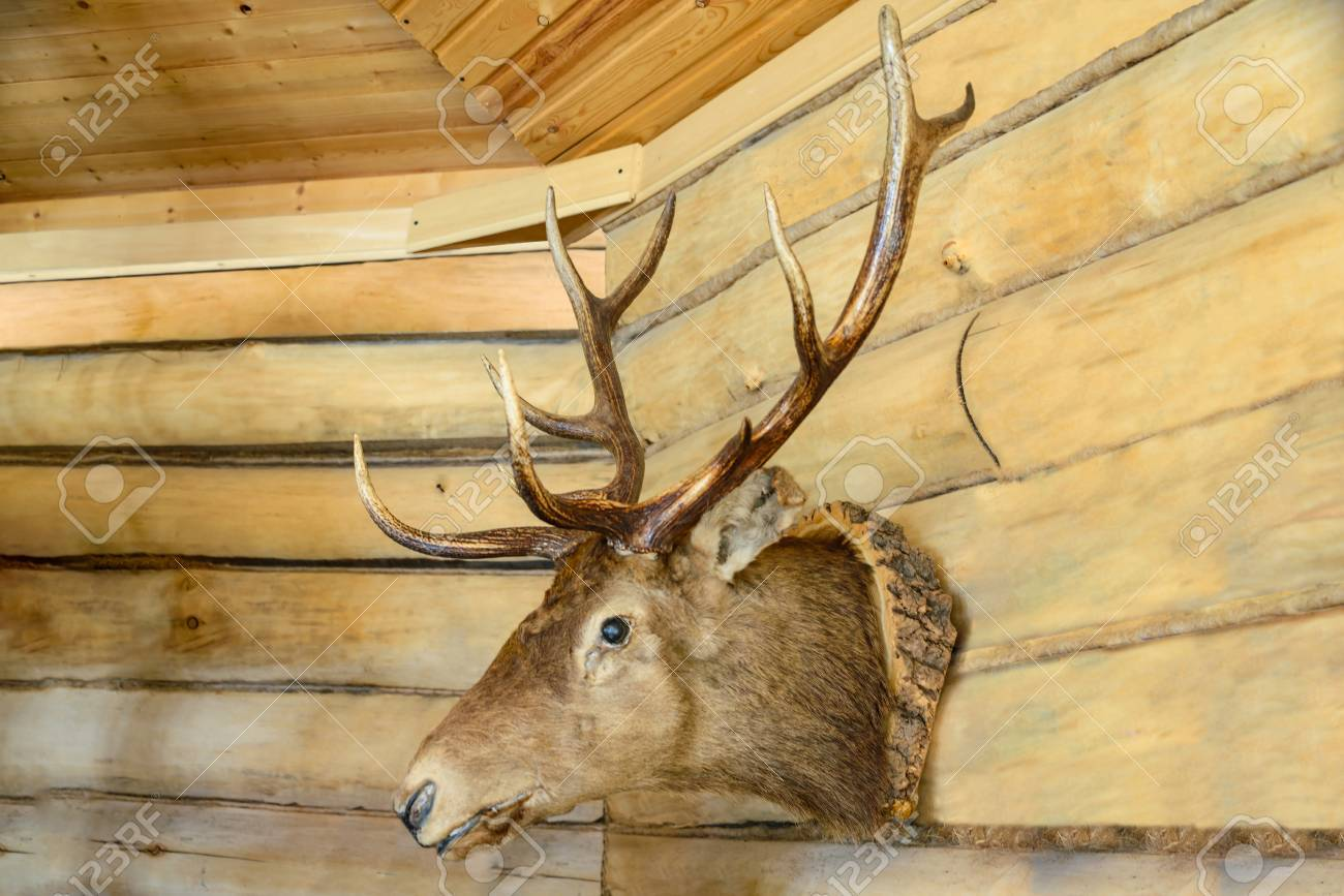 Unique Wooden Stag Head Wall Decoration Image - Art & Wall Decor ...