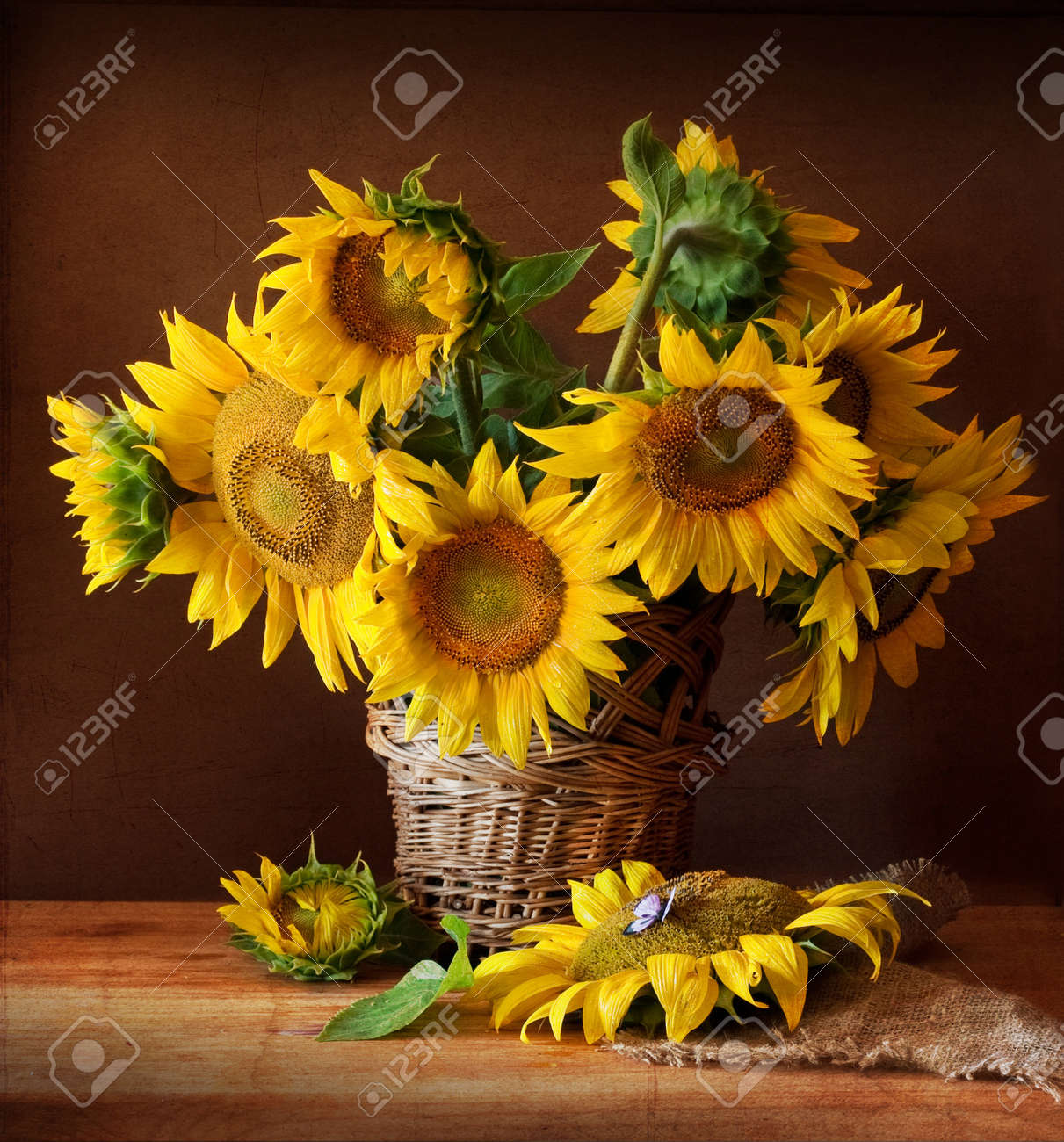 Still Life with Sunflower and Butterfly Stock Photo - 8641537