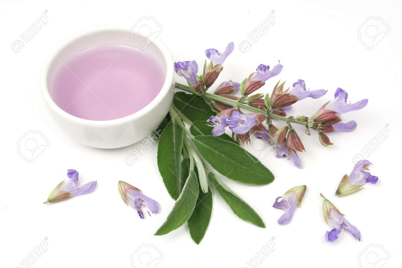 Salvia Officinalis Plant Salvia Officinalis Used For