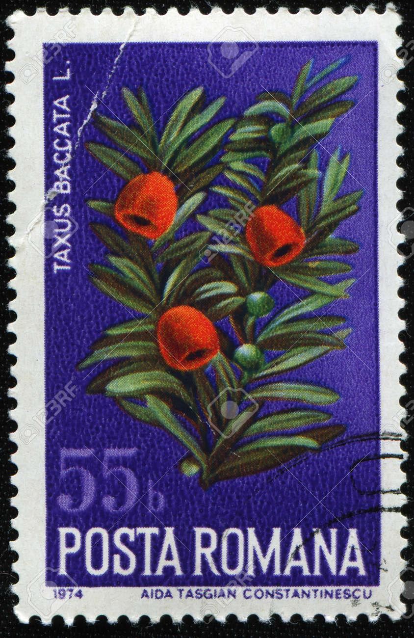 ROMANIA - CIRCA 1974: A stamp printed in Romania shows common yew, or European yew - Taxus Baccata L., circa 1974 Stock Photo - 8381333