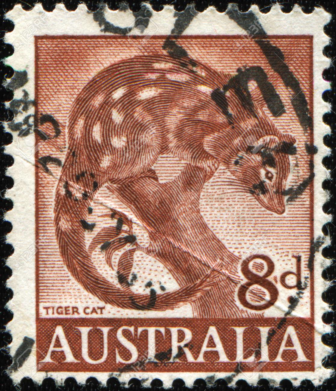 AUSTRALIA - CIRCA 1960: An Australian Used Postage Stamp shows tiger cat, circa 1960 Stock Photo - 8682029