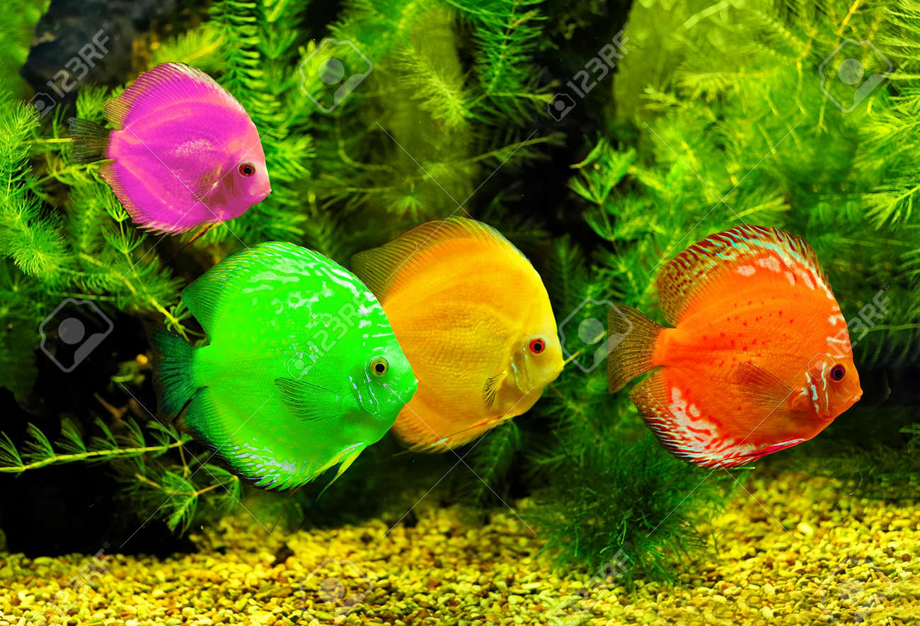 Fish Tank Stock Photos. Royalty Free Fish Tank Images