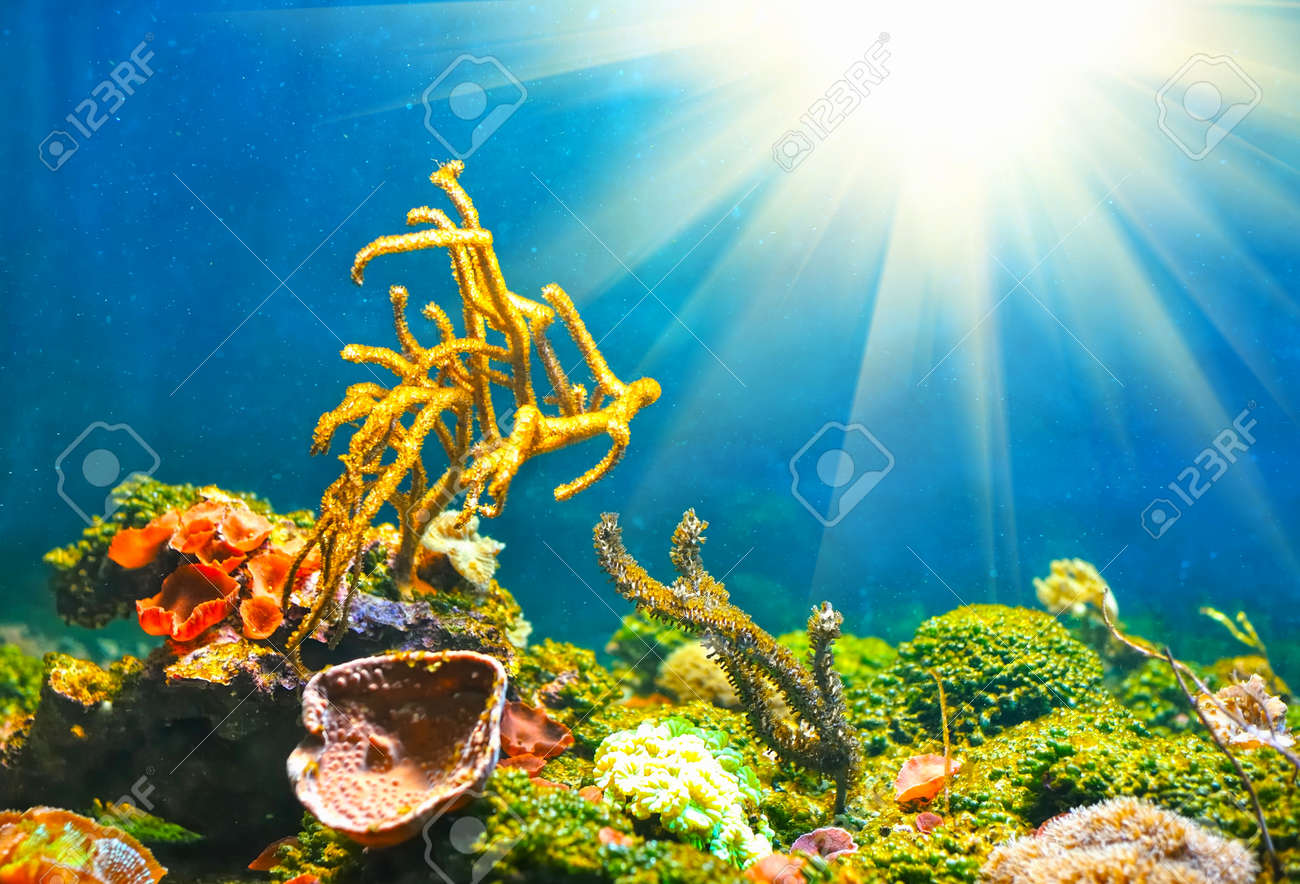 Colorful sunny underwater world - 12332687