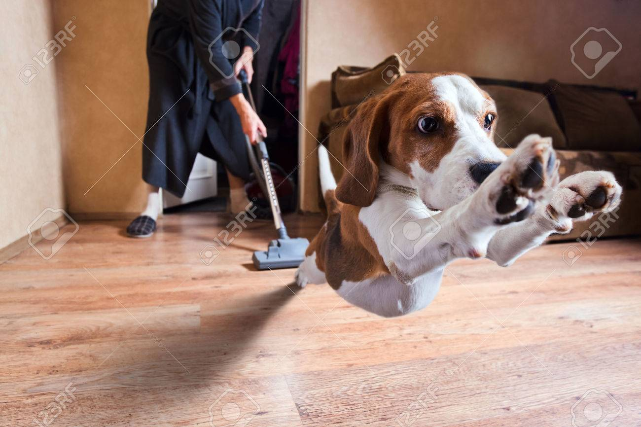 Very terrible vacuum cleaner , focus on dog head Stock Photo - 22967155