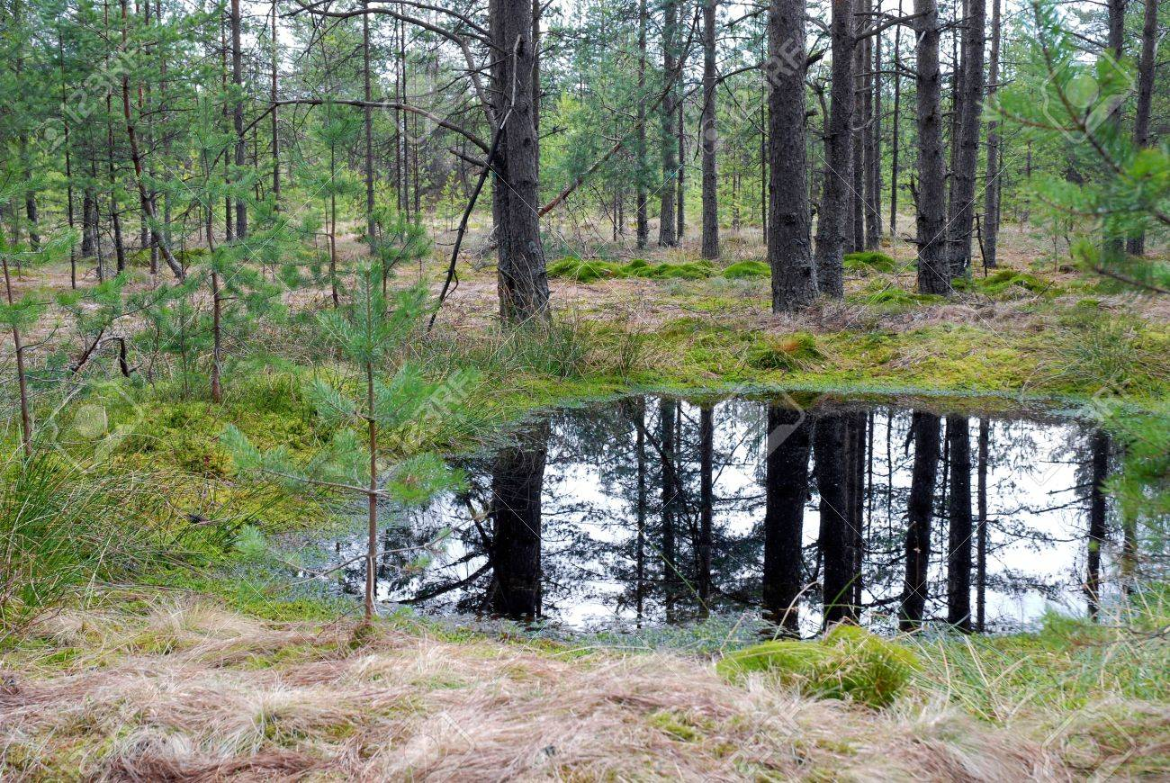 Peat-bog - Forest Marshland Stock Photo, Picture And Royalty Free ...