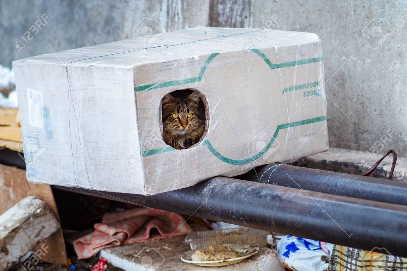 の 猫 家 ため の
