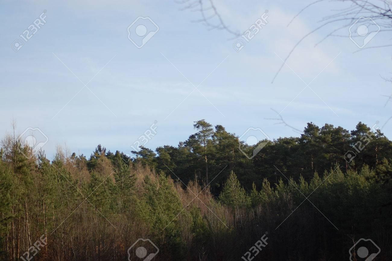 Ensoleille Foret A L Horizon Sous Le Ciel Bleu Avec Des Petits