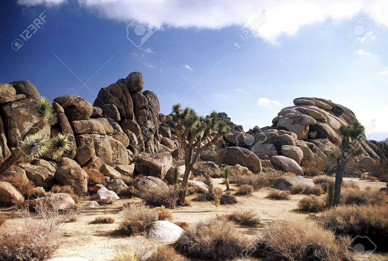 Desert. Stock Photo - 3191136