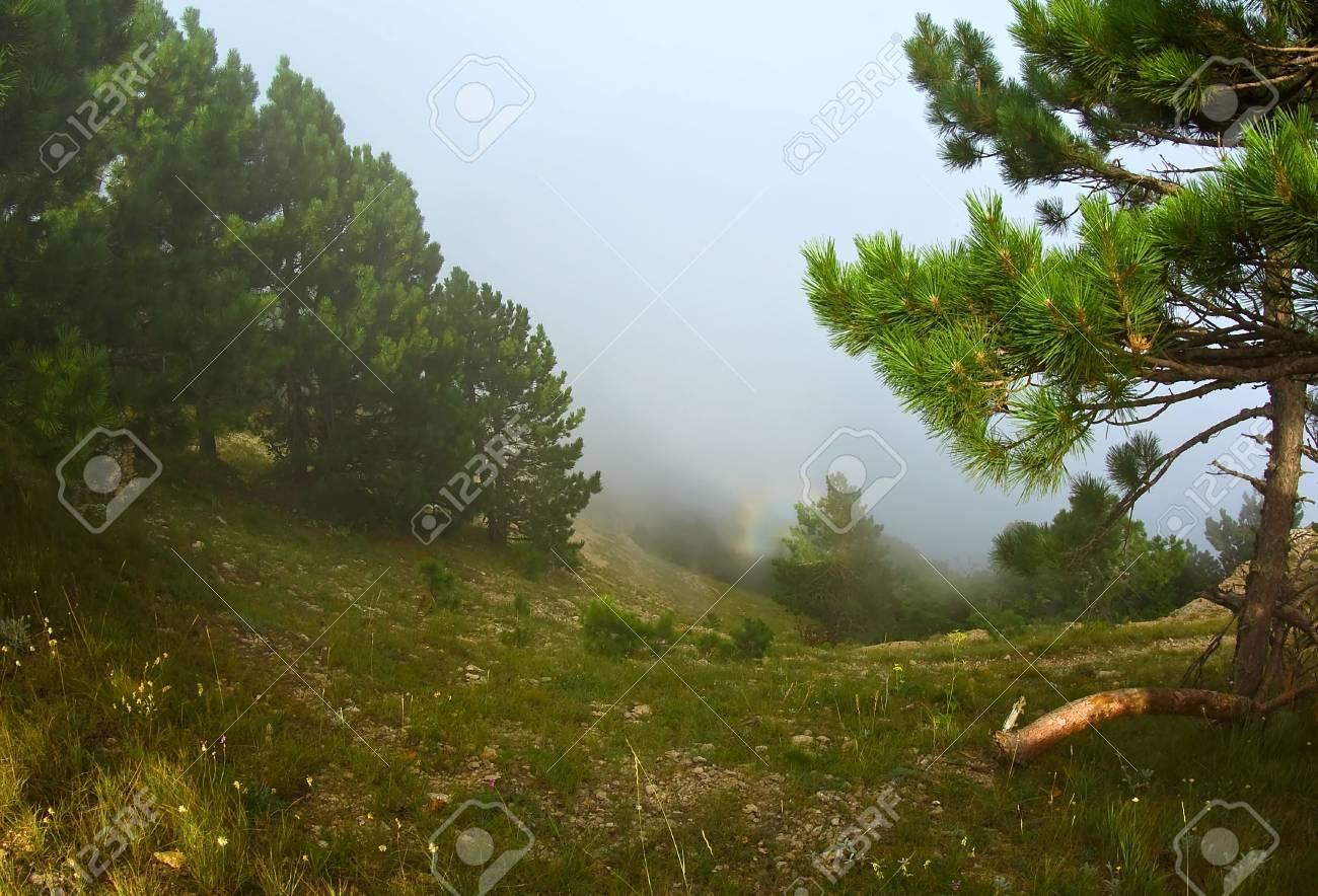 Rainbow in the mist Stock Photo - 7808836