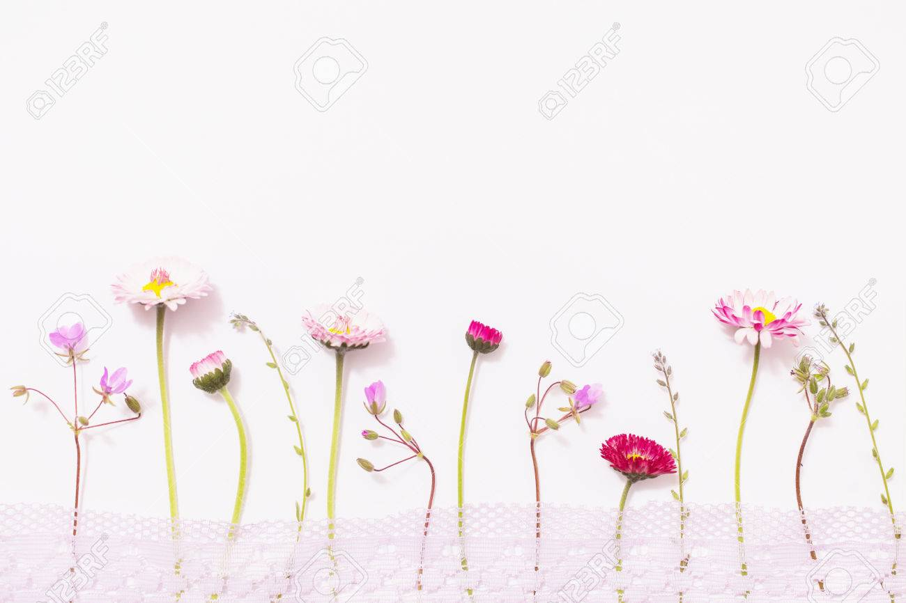 Lay Flat Wildflowers On A White Background Floral Pattern Of