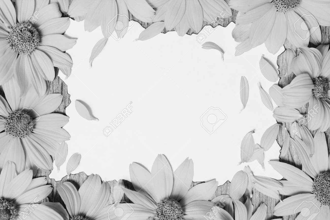 Black And White Art Photography Monochrome Frame Of Flowers Stock