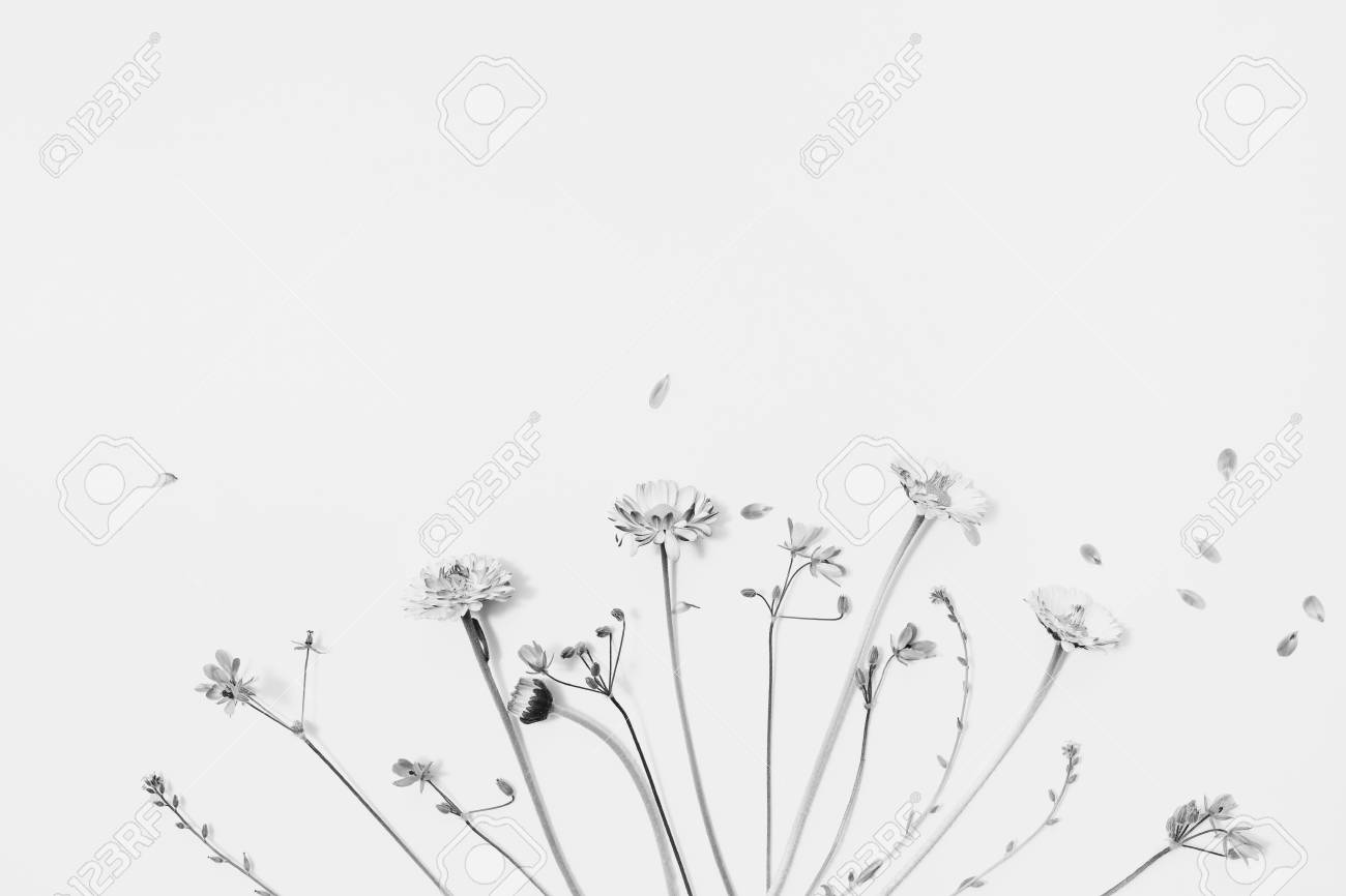 Black And White Art Photography Monochrome Lay Flat Wildflowers