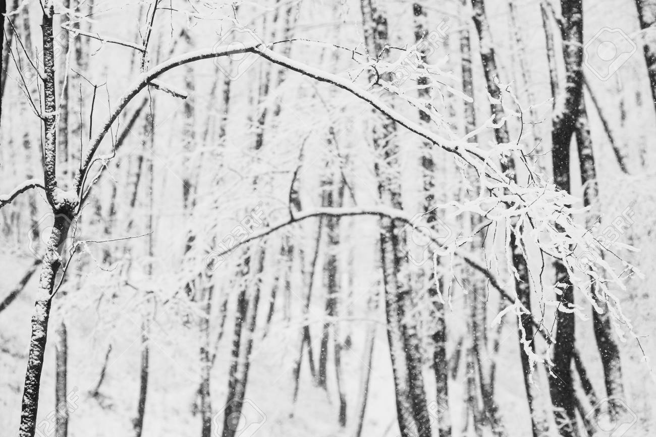 Black and white art photography monochrome fairy winter forest in the snow winter time