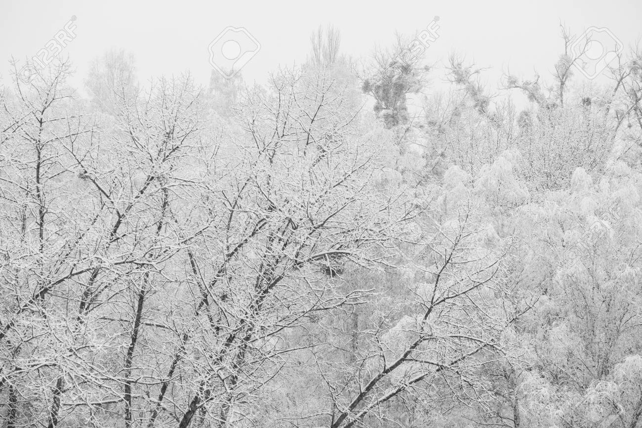 Black and white art photography monochrome fairy winter forest