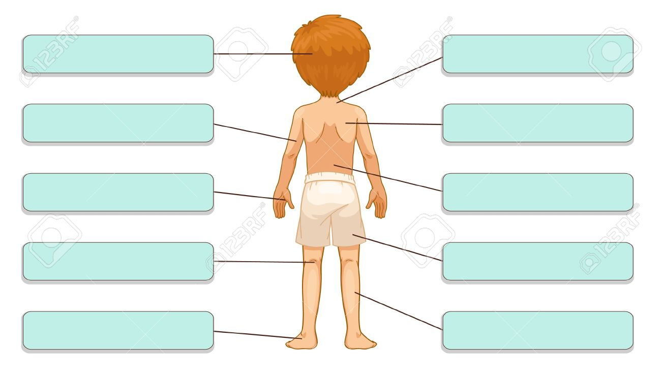 Illustration Of Body Parts Labels Back Royalty Free Cliparts