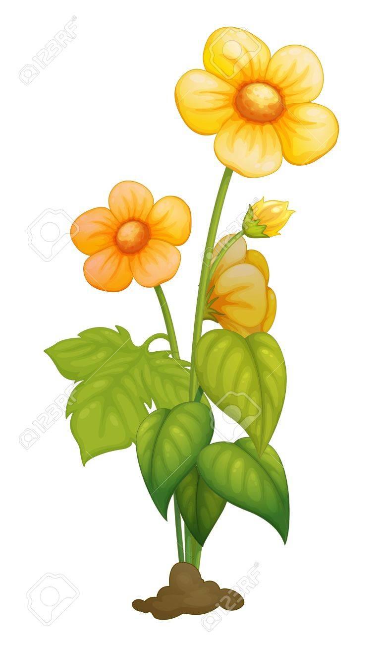 Illustration of a detailed flower Stock Vector - 13376923