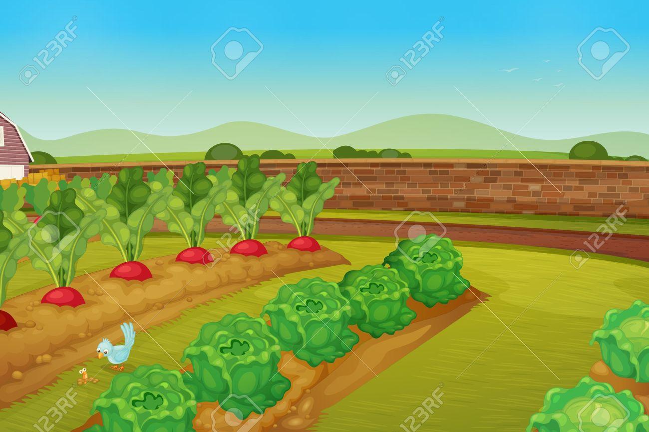 illustration of a vegie patch - 13376902